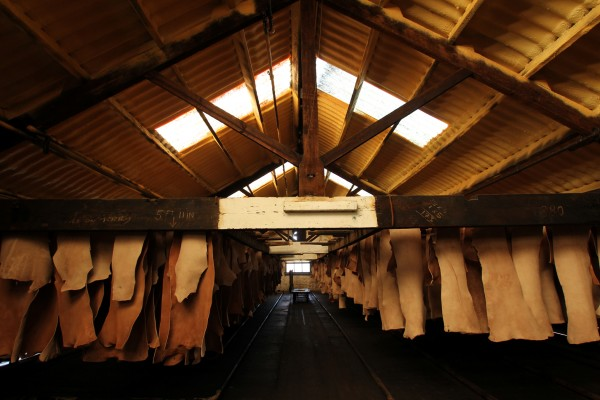 tannery (5)