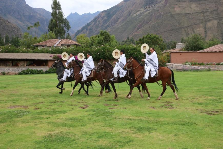 Peruvian trotting horses 2