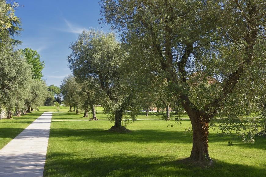 Olive_groves2