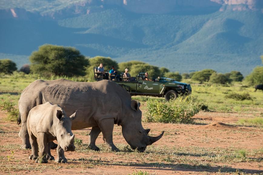 Marataba Safari Lodge Safari Wildife Rhino