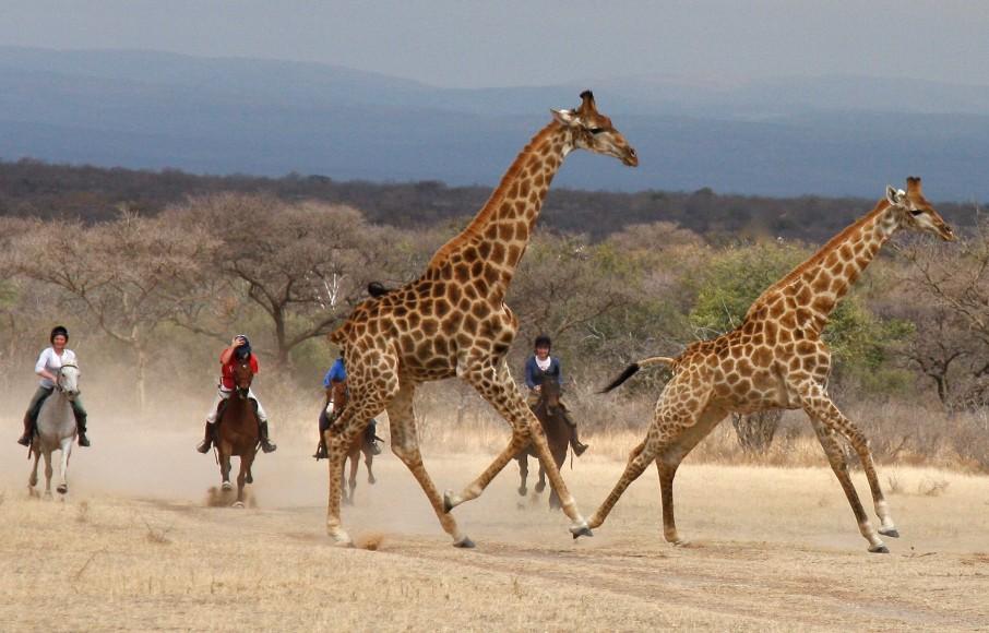 Riding safaris at Ant's (16)